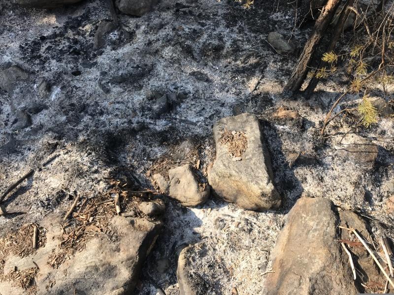 Уголовное дело по факту лесного пожара, произошедшего в апреле 2020 года в Шелеховском районе по вине иркутянина, передано в суд